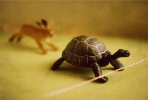 TortoiseHare1